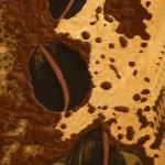 83 cm x 30 cm tecnica mista su tavola non disponibile anno 2009